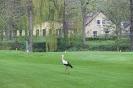 Der Storch ist auch schon da!